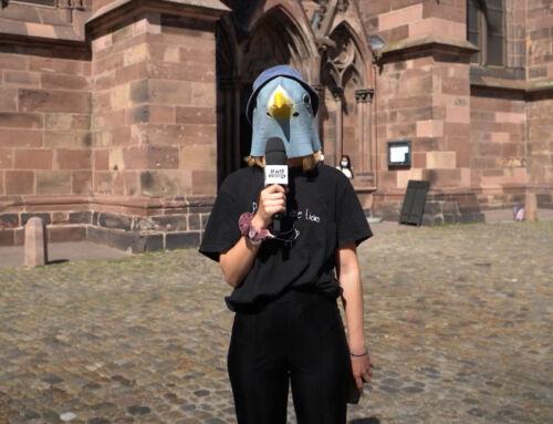 Tauben – Is n Thema im Gemeinderat